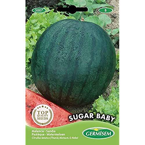 Germisem Wassermelone SUGAR BABY