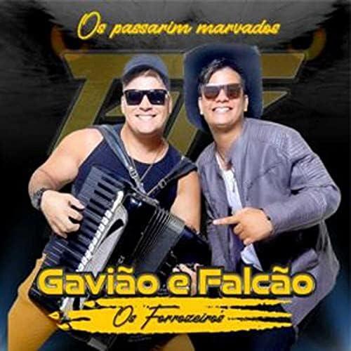 Gavião & Falcão