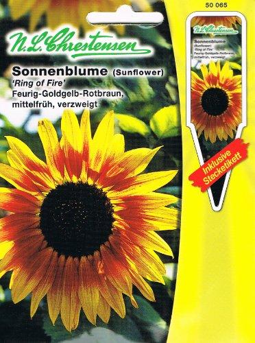 Tournesol « Ring of Fire' feury or jaune rouge/jaune moyen, branché (avec étiquette d'emboîte) » « Helianthus annuus »
