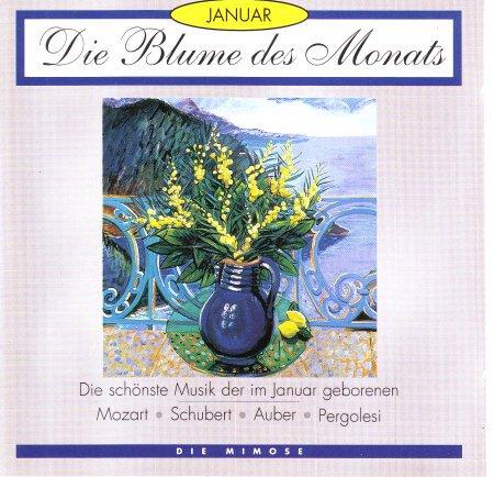 Die Blume des Monats - Januar - Die Mimose