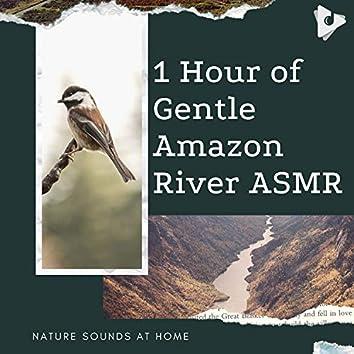 1 Hour of Gentle Amazon River ASMR