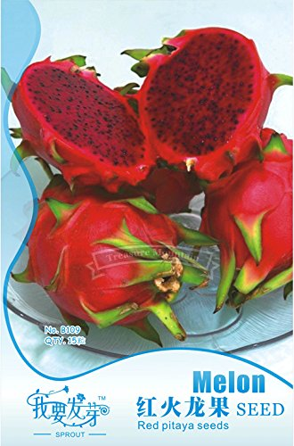 1 Original Pack, 15 graines / paquet, Pitaya ROUGE intérieur Rouge à l'extérieur, doux fruit du dragon, Pitaya Cactus, Délicieux Très # NF008