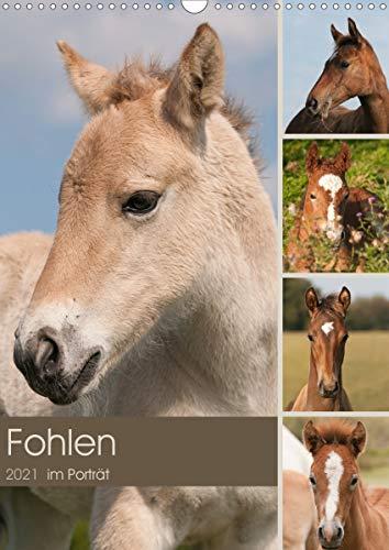Fohlen im Porträt (Wandkalender 2021 DIN A3 hoch)