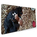 The cat is Breastfeeding Super Large Gaming Mouse pad,, with Non-Slip Base (15.8x35.5 inches), Comfortable, Foldable, Suitable for desktops, laptops, Keyboards, etc