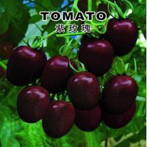 Violet petites graines de tomate Rose 200 graines de graines de légumes biologiques chaudes