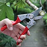Garden Shears Review and Comparison