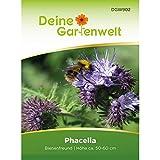 Phacelia Bienenfreund 100 g Vorteilspack | Blumensamen für Bienen | Gründüngung | Samen für 25 m² | Bienenweide