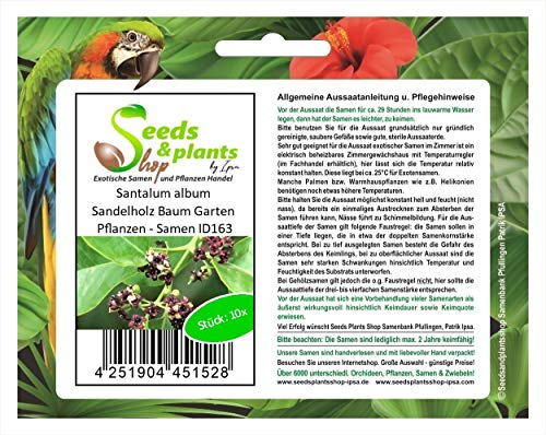 Stk - 10x Santalum album Sandelholz Baum Garten Pflanzen - Samen ID163 - Seeds Plants Shop Samenbank Pfullingen Patrik Ipsa