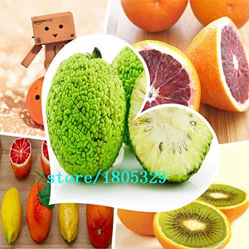Bloom Green Co. GGG/sac Balcon 50pcs Patio pot arbres fruitiers Graines Plantée Kumquat Graines d'Orange Mandarine Citrus: multicolore