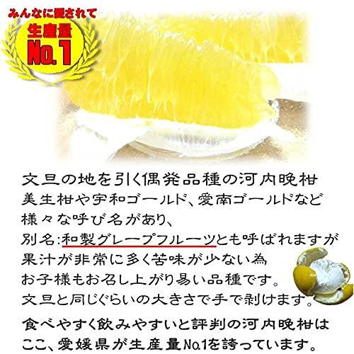 河内晩柑(かわちばんかん)
