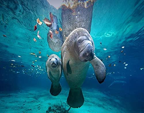 Kit de Pintura de Diamante 5D,Mamá y bebé manatí en el mar,Florida,Bordado Pinturas Fotos Bricolaje Artesanía para la Decor de la Pared del Hogar,16' x 12'