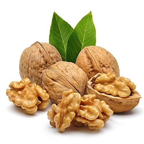 3pcs/sac à feuilles persistantes Noyer semences non-OGM biologique délicieux fruits de noix Bonsai Plante en pot pour Nutritif Décor de jardin