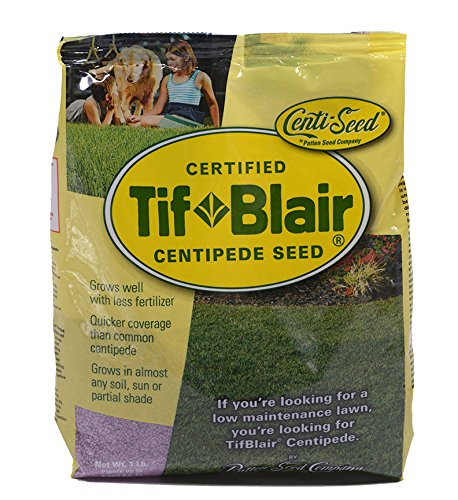 One of the best grass to grow in Florida is TifBlair Centipede Grass #grass #lawn #backyardLandscaping #backyardLandscapingIdeas #landscaping