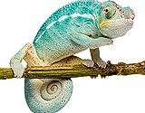 Apalis Fototapete Tür Papier No.23 'Hello Chameleon'