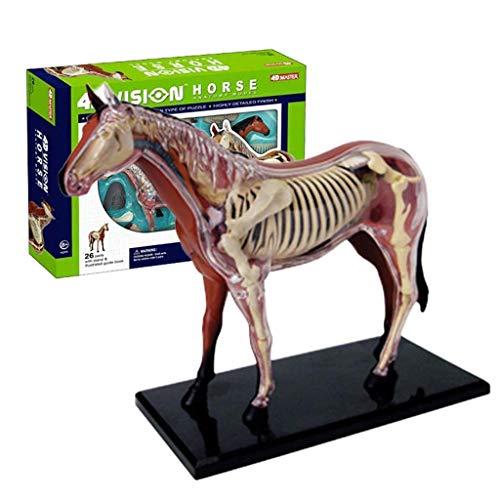 XHLLX Modelos 26pcs Caballo Órgano Esquelético Anatomía Médica Enseñanza Niños Puzzle Juguetes