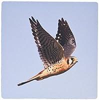 3drose LLC 8x 8x 0.25インチマウスパッド、American Kestrel in Flight ( MP _ 45750_ 1)