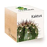 Feel Green Ecocube - Cactus ecológicos, Idea de Regalo sostenible (100% ecológico), para Cultivo, Plantas en Cubos de Madera, Fabricado en Austria
