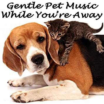 Gentle Pet Music While You're Away