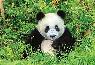 Educa Children's 500 Panda Bear Puzzle
