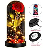 kaikai Rose Lamp Beauty and The Beast, Enchanted Rose Lamp Kit, Warm Light or Colorful LED Fairy String Lights, Best Gifts for Girls and Woman, USB or Battery Operated