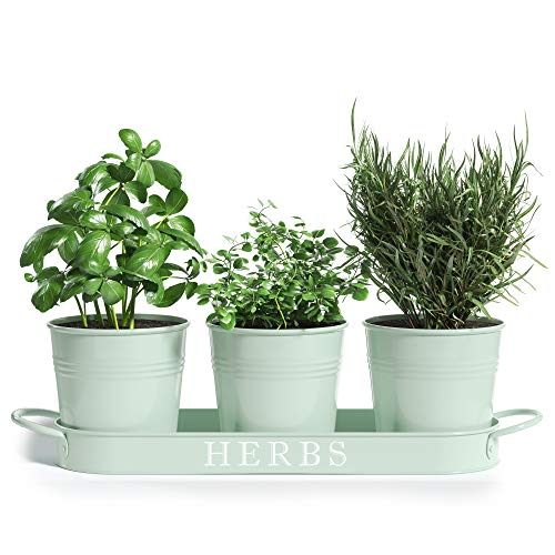 Barnyard Designs Herb Pot Planter Set with Tray for Indoor Garden...