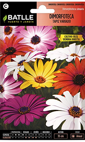Semillas de Flores - Dimorfoteca Tapiz variado - Batlle