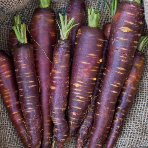 schwarze Möhre Karotte 250 x Samen / 100% Natursamen/sehr selten echte Rarität super lecker und echter Hingucker