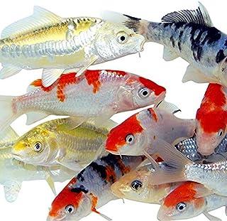Aquarium Fish Store Online