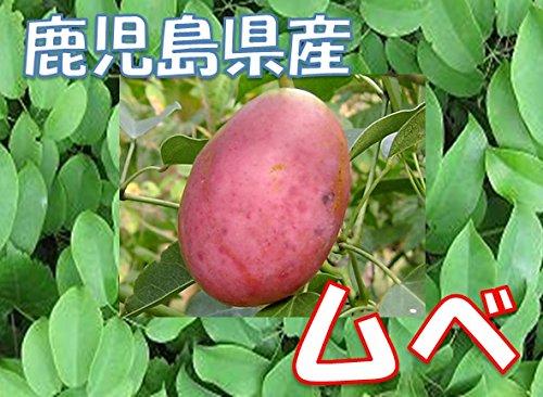 鹿児島県産 ムベ / むべ 1パック (5・6玉前後)  秋の味覚!