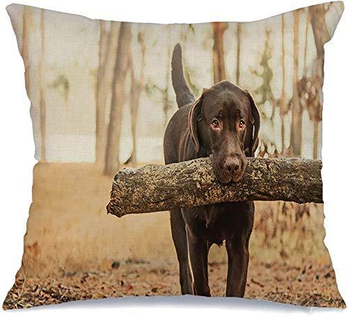 Funda de cojín Brown Snow Chocolate Labrador Retriever sosteniendo un palo con sus animales Vida silvestre Perro Campo Boca feliz Funda de Cojine 45 X 45CM