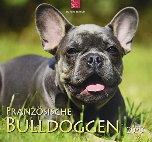 Französische Bulldoggen: Original Stürtz-Kalender 2020 - Mittelformat-Kalender 33 x 31 cm