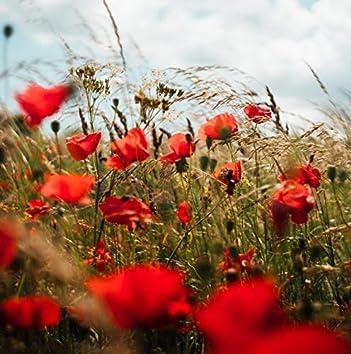 Golden Fields   Perfect Walk   Hypnosis