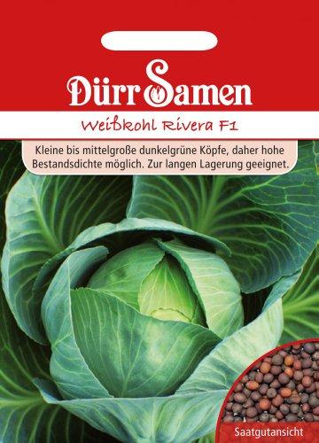 Dürr-Samen Weißkohl Rivera F1