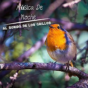 Música De Noche Al Sonido De Los Grillos