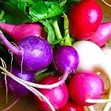 Oce180anYLVUK Semillas De Rábano, 50 Piezas/Bolsa Semillas De Rábano Vitaminas Ricas Color Plántulas De Rábano Dulce Productivas Para El Balcón Semilla