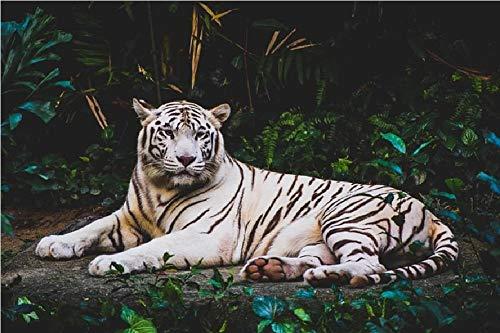 Albino Tiger ligt op de grond bij nacht schilderen op cijfers DIY uniek
