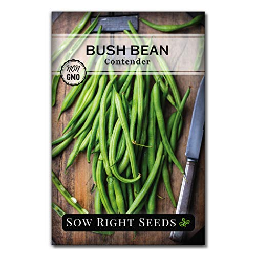 Sow Right Seeds - Contender Green Bean Seed for Planting - Non-GMO Heirloom Packet with Instructions to Plant a Home Vegetable Garden