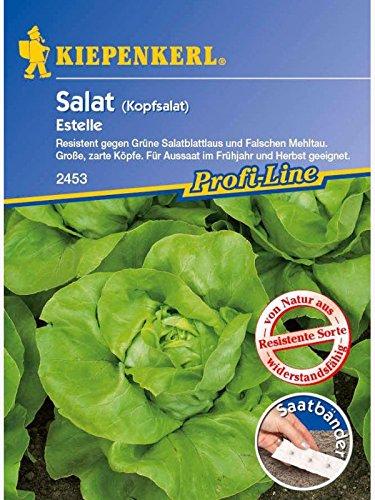 Salat Kopfsalat Estelle resistent Saatband