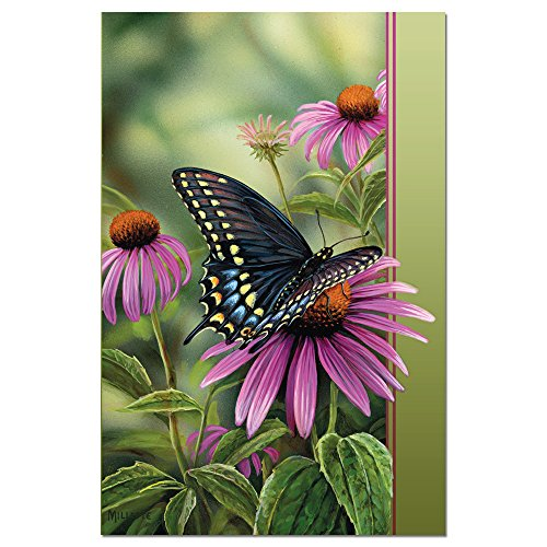 """Tree-Free Greetings EcoNotes Stationary- Blank Note Cards with Envelopes, 4"""" x 6"""", Moments Rest, Boxed Set of 12 (FS66504)"""