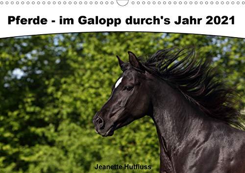 Pferde - im Galopp durch's Jahr 2021 (Wandkalender 2021 DIN A3 quer)