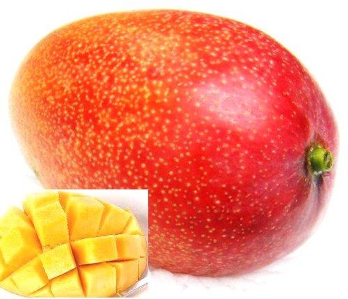 メキシコ・ペルー・ブラジル産 ケント種 アップルマンゴ 貴重大玉 12玉前後6kg(空輸品)