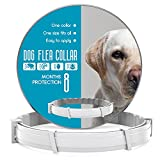 Best Dog Flea Collars - Flea and Tick Prevention for Dogs - Flea Review