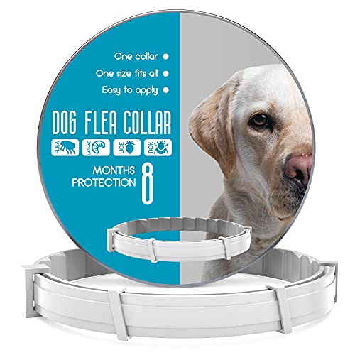Flea and Tick Prevention for Dogs - Flea Collar