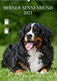 Berner Sennenhund 2021 (Wandkalender 2021 DIN A2 hoch)