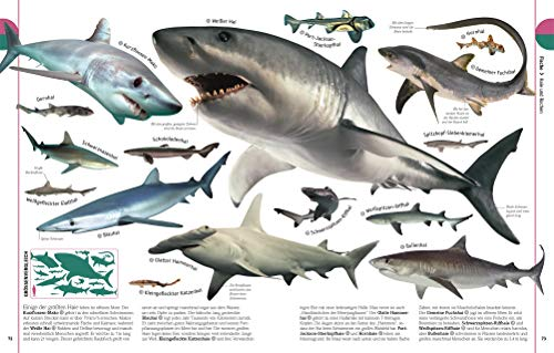 Tiere: Die Vielfalt der Tierwelt in 1.500 Bildern - 6
