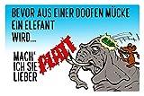 Schatzmix Blechschild Spruch Bevor aus einer Mücke Ein Elefant Wird Metallschild Wanddeko 20x30 cm Tin Sign Señal metálica, hojalata, Multicolor, 20 x 30 cm