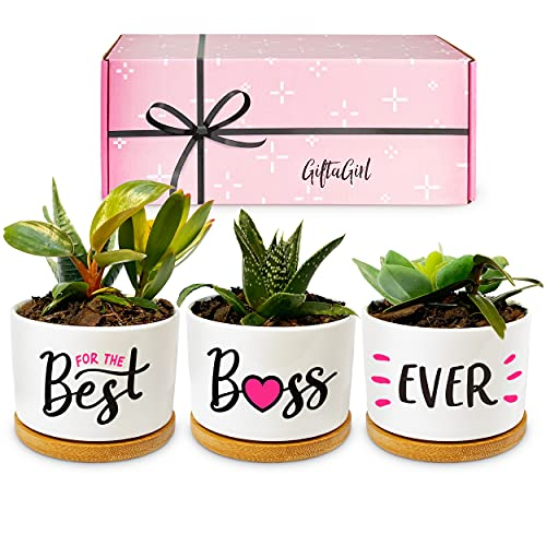 GIFTAGIRL Boss Lady Gifts for Women - Our Beautiful Succulent Best Boss Ever Gifts, are Pretty Gifts for Your Boss. Also Popular Home Office Girl Boss Gifts or Cute Office Decor for Women Bosses