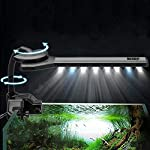 Hillhead-45W-Blau-Wei-312-15-LED-Aquarium-Licht-Clip-on-360-Flexible-Aquarium-Lampe-AC220-240V