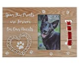 Pet Loss Memorial Gift Photo Frame Message Plaque by Sort It Rite - Pet Collar Keepsake Picture Frame to show you care - 4x6 Cats and Dogs Picture Frame for Bereaved Pet Owner