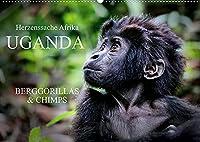 UGANDA - Berggorillas & Chimps (Wandkalender 2022 DIN A2 quer): Zerbrechliche Wesen - Afrikas Menschenaffen (Monatskalender, 14 Seiten )